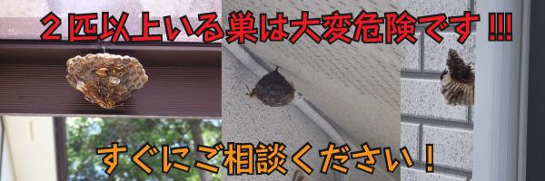 アシナガバチの画像 p1_4